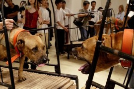 Guggenheim Accused of Supporting Animal Cruelty in New Exhibition